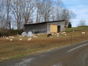 Lambing barn move