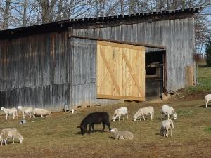 lambing barn move2