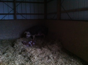 Ever seen a pig nest?! I hadn't until last Spring. Pretty awesome huh?!
