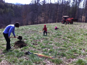Had lots of help planting an orchard