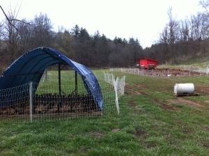 Moved our first batch of meat birds onto pasture
