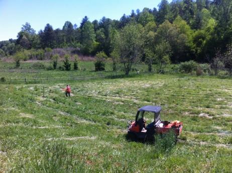 Pig field before.