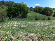 Hog field with fencing and freshly bush hogged