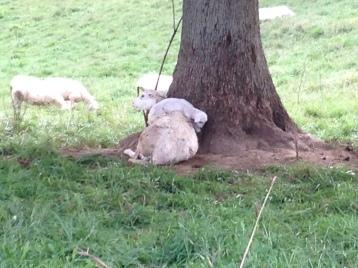 Looks like a comfy spot
